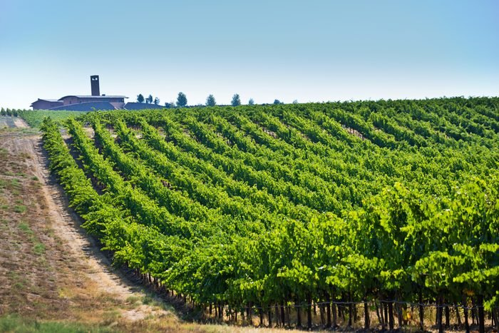 Columbia Valley Vineyard Winery Landscape of Kirkland, Washington