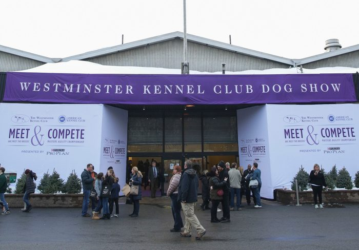 westminster dog show kennel club