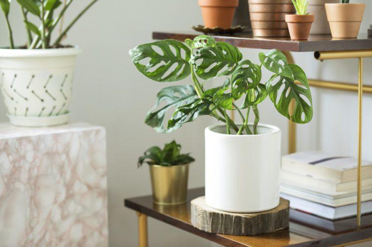 house plants feng shui