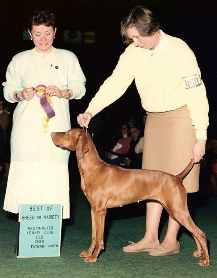 grandmother westminster dog show