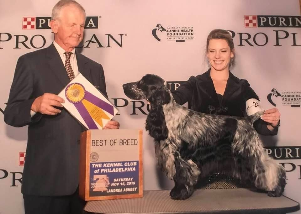 joey westminster dog winner