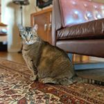 I Tried Putting My Cat on a Diet—Here's How It Went