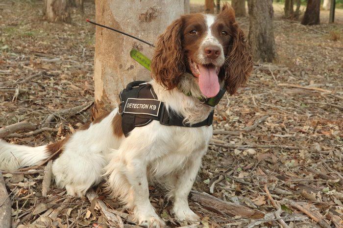 TATE Tate Animal Training Enterprises detection K-9