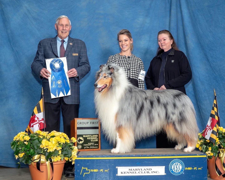 collie maryland kennel club dog show winner
