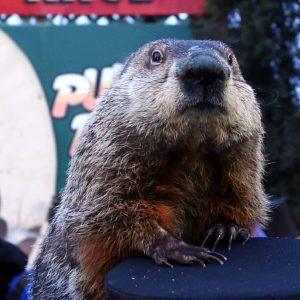 How Accurate Are Punxsutawney Phil's Predictions?