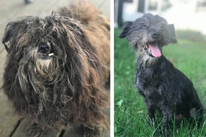berkeley rescue dog before and after