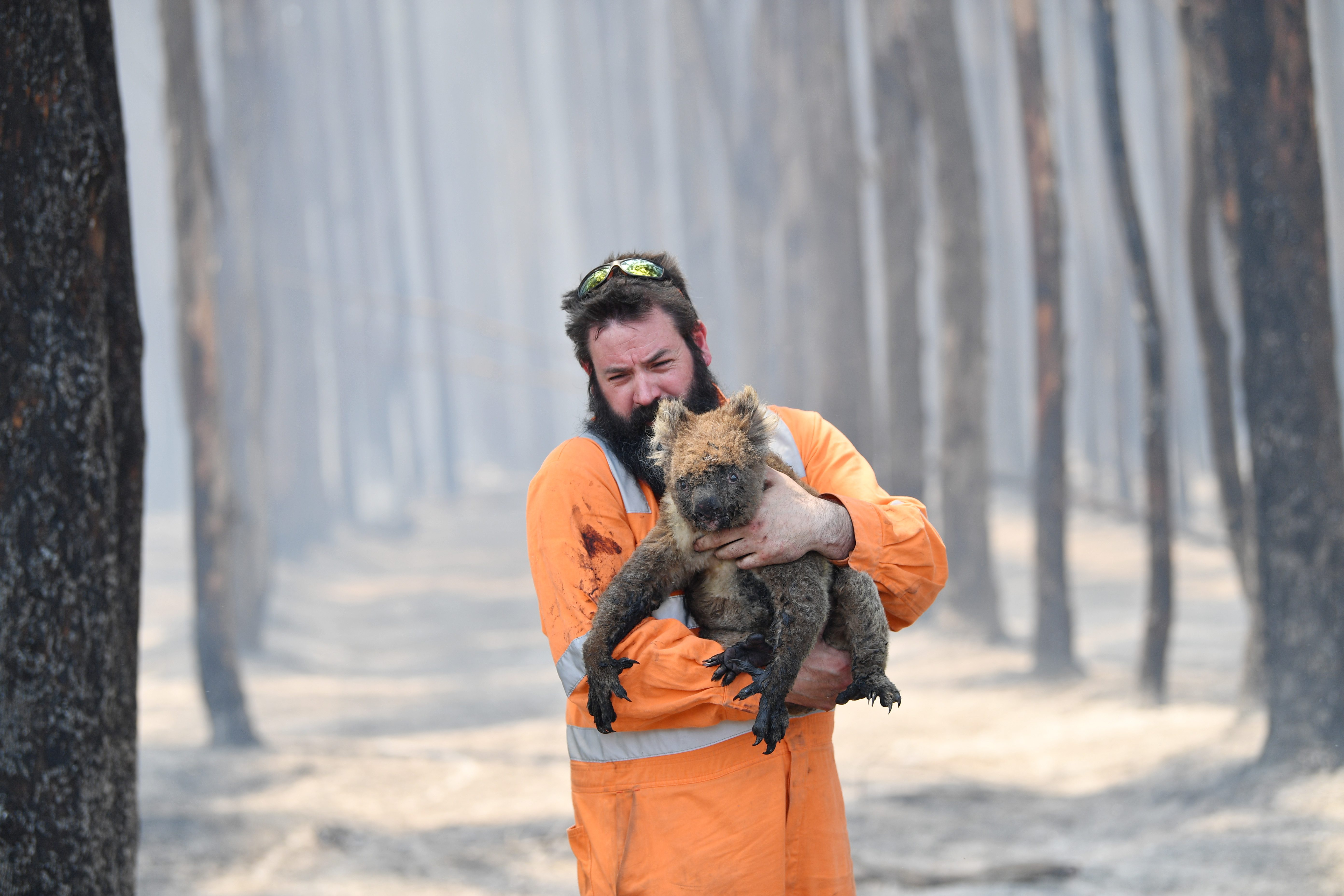 Mandatory Credit: Photo by DAVID MARIUZ/EPA-EFE/Shutterstock (10519515b) Adelaide wildlife rescuer Simon Adamczyk holds a koala he rescued at a burning forest near Cape Borda on Kangaroo Island, Australia, 07 January 2020. A convoy of Army vehicles, transporting up to 100 Army Reservists and self-sustainment supplies, is on Kangaroo Island as part of Operation Bushfire Assist at the request of the South Australian Government. Bushfires in Australia, Kangaroo Island - 07 Jan 2020