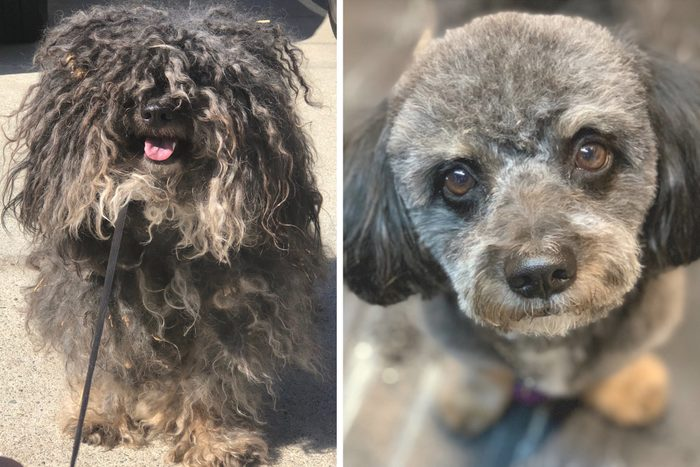 dexter before and after rescue dog