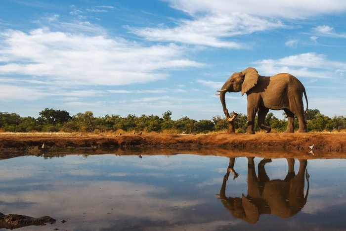A single elephant is reflected on the still surface of a waterhole on a beautiful day in Botswana