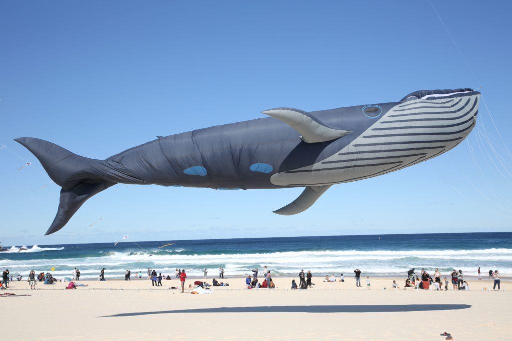 a whale kite flies above bondi beach in australia
