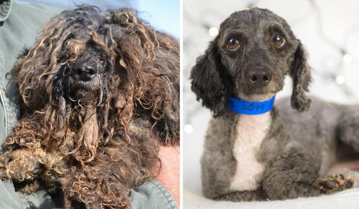 gaston rescue dog before and after
