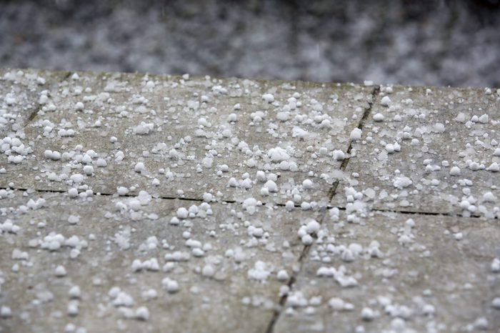 Snow pellets on the ground. Also known as graupel, precipitation that forms when supercooled droplets of water are collected and freeze on falling snowflakes like ball snow crystals.