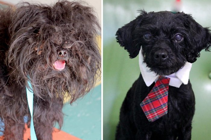 griffin dog before and after