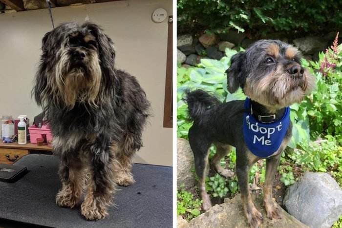 harry pawter dog recused