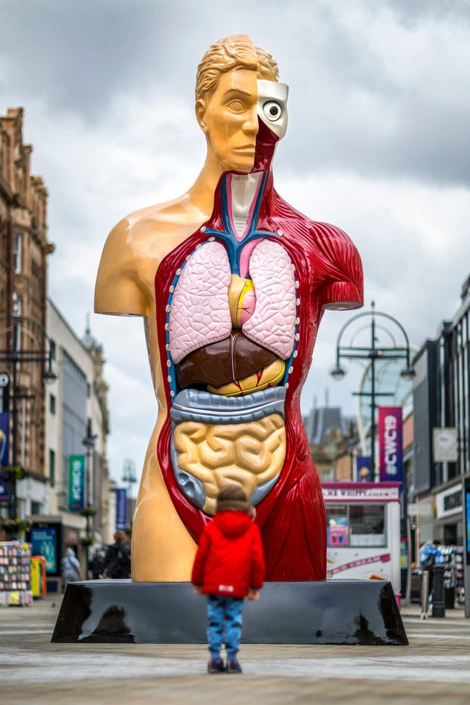 a boy looks up at a sculpture of the human body organs