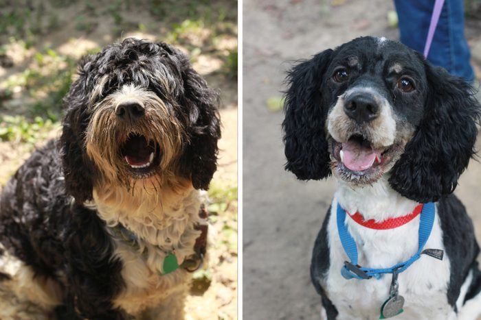 jasper before and after dog rescue