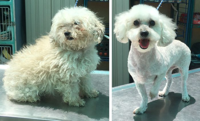 odie before and after