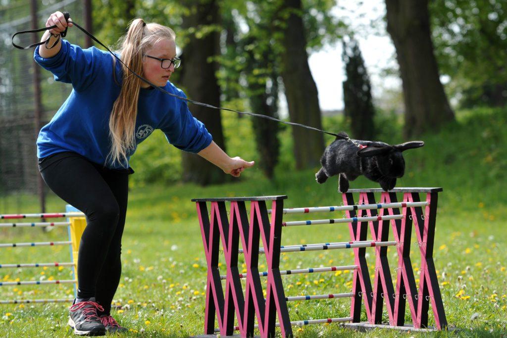 a girl and her bunny go through a hurdles course
