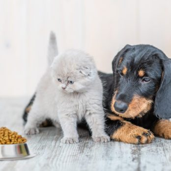 Happy Ending for Kitten Saved by Miracle Dog