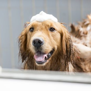 The 12 Best Dog Shampoos and Conditioners