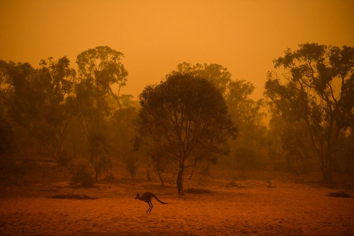 Mandatory Credit: Photo by LUKAS COCH/EPA-EFE/Shutterstock (10518087i) A kangaroo is seen in bushland surrounded by smoke haze early morning in Canberra, Australia, 05 January 2020. Smoke haze in Canberra, Australia - 05 Jan 2020