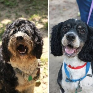 12 Incredible Rescue Dog Makeovers