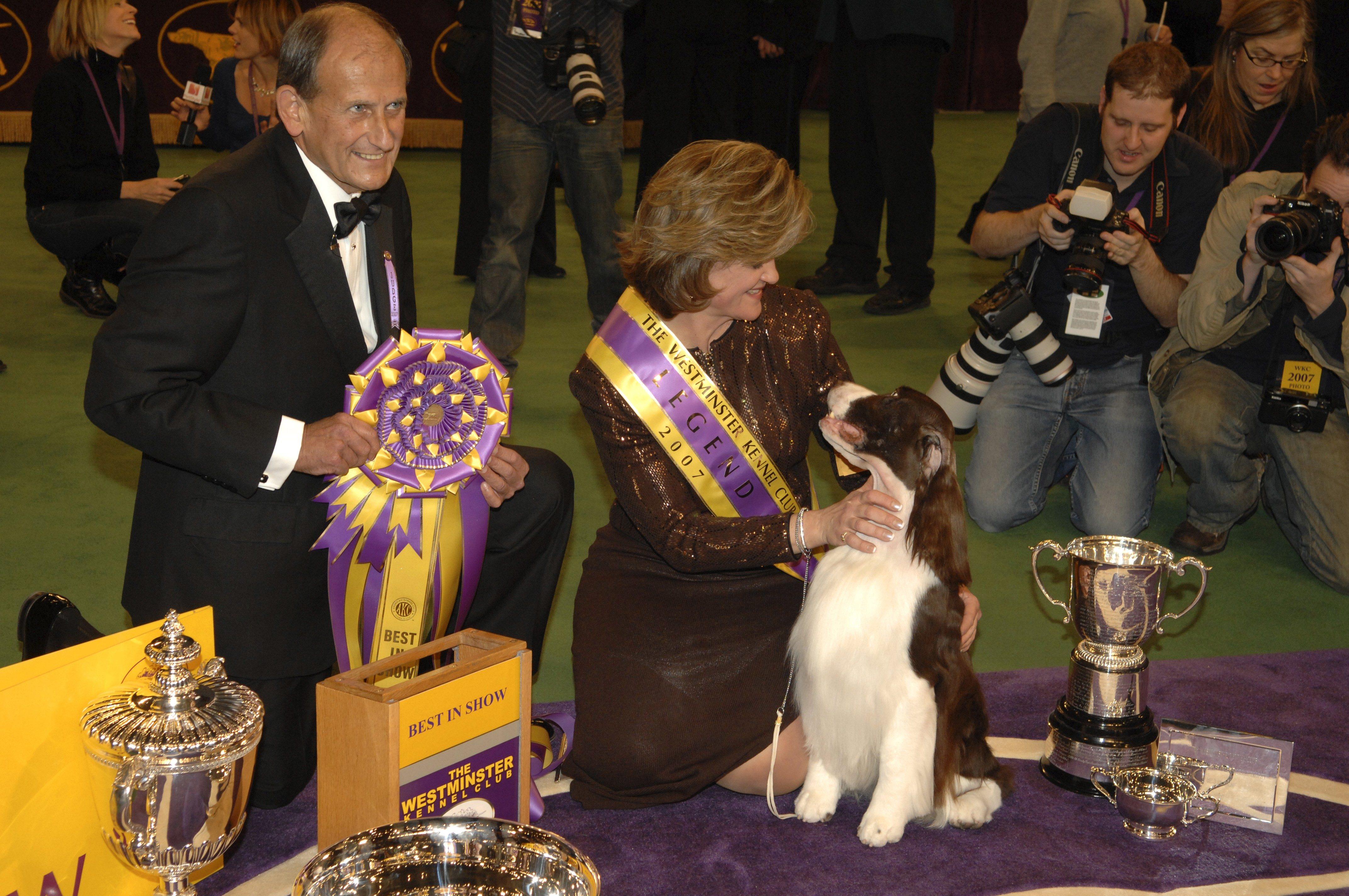 English Springer Spaniel westminster dog show