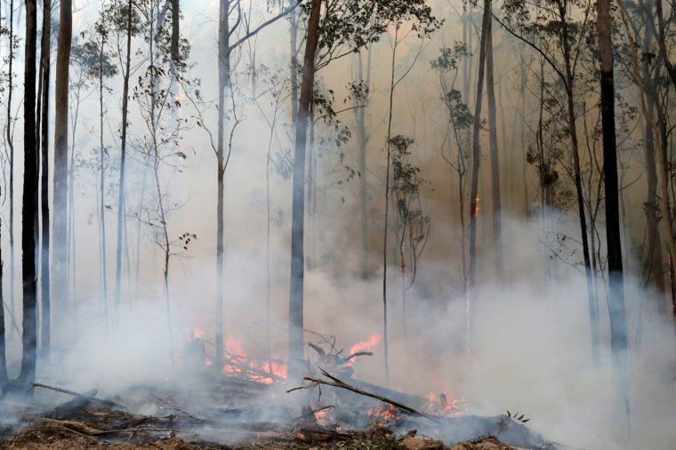 australia bush fire 2020