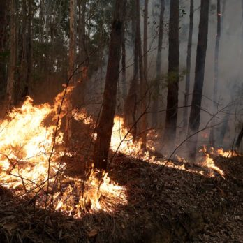 7 Animals That May Be Extinct After the Australia Wildfires