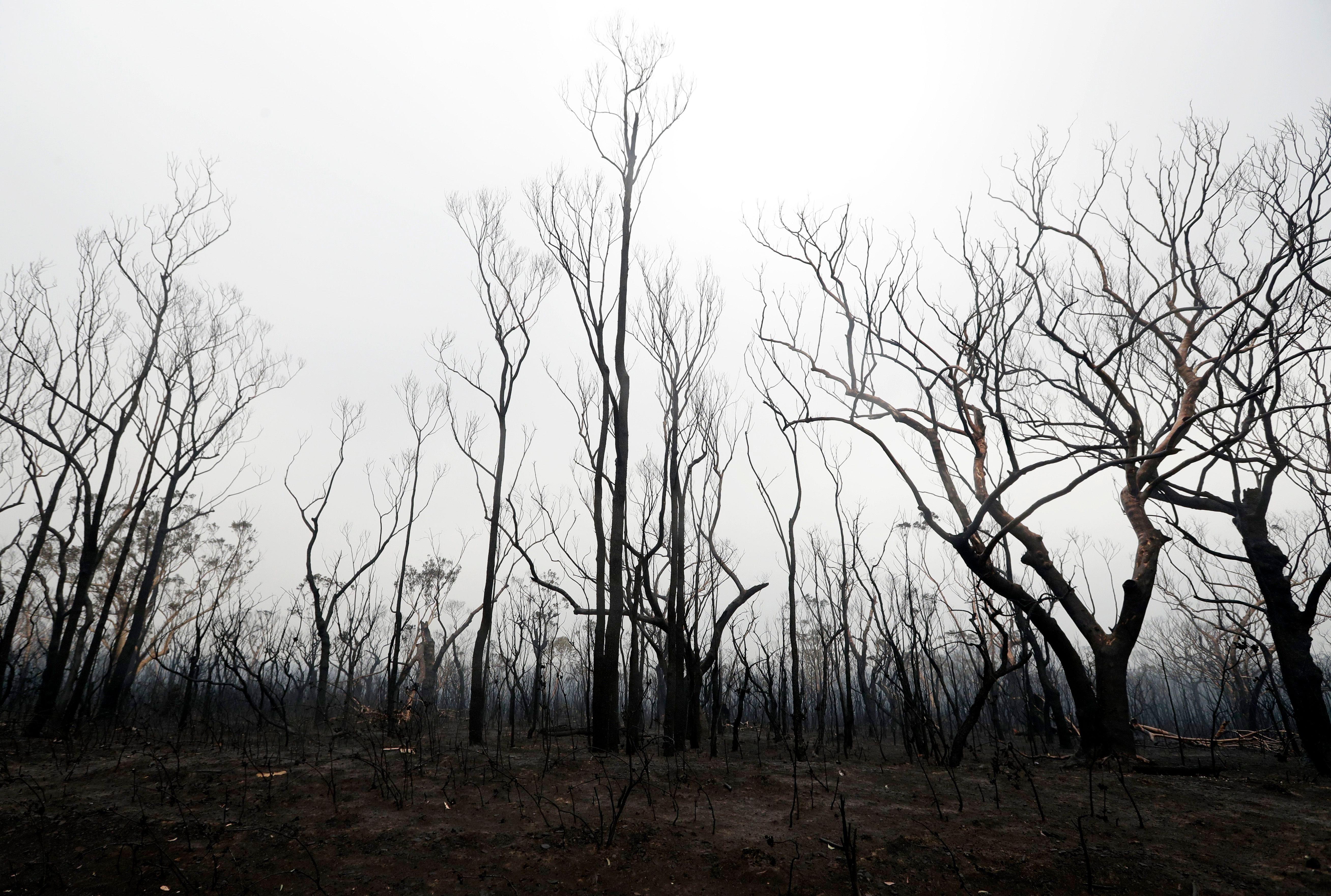 burnt trees australia