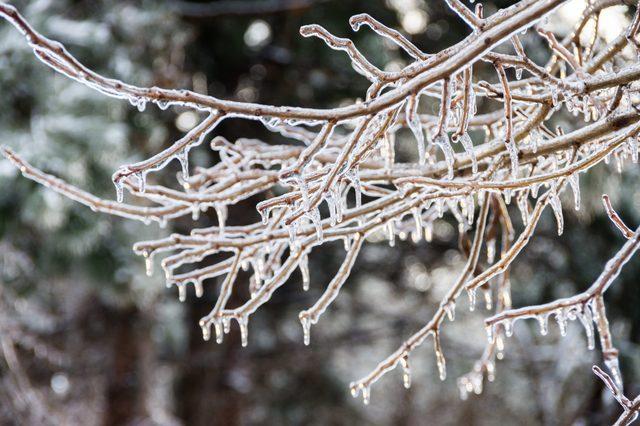 Winter frozen tree
