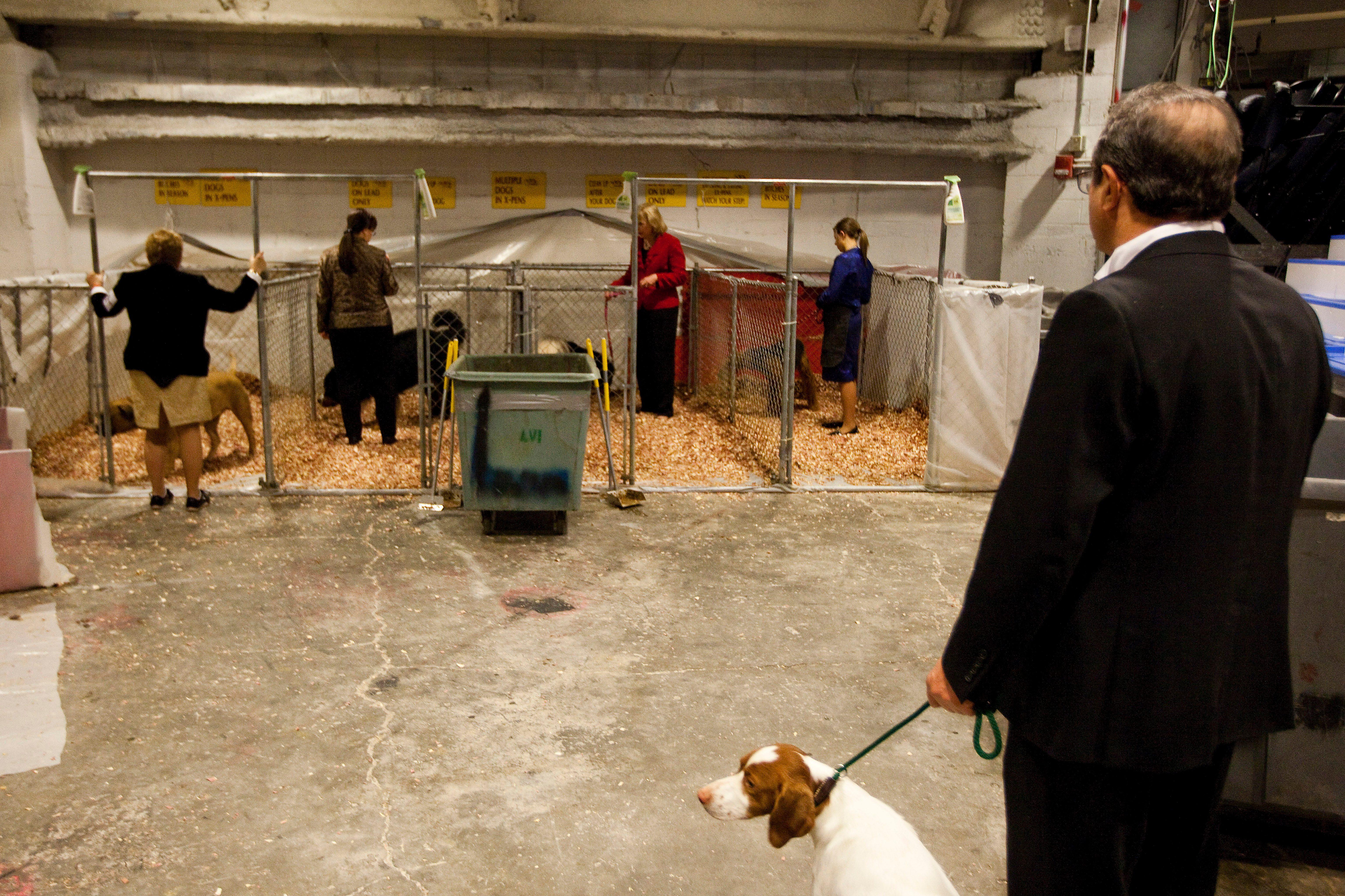 westminster dog show dog bathroom