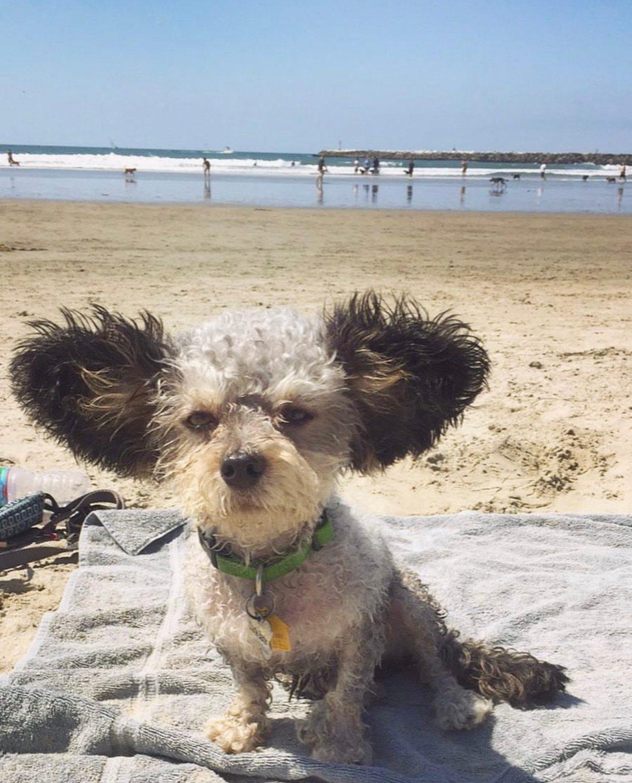 charlie baxter dog