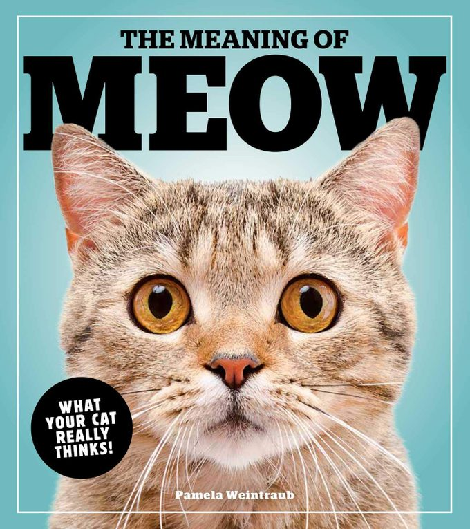 the meaning of meow cat book