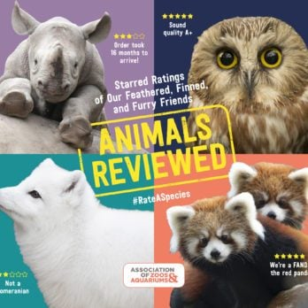 """13 Hilarious """"Product Reviews"""" of Your Favorite Zoo Animals"""