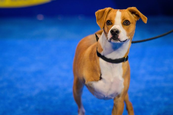 champion dog American Rescue Dog show