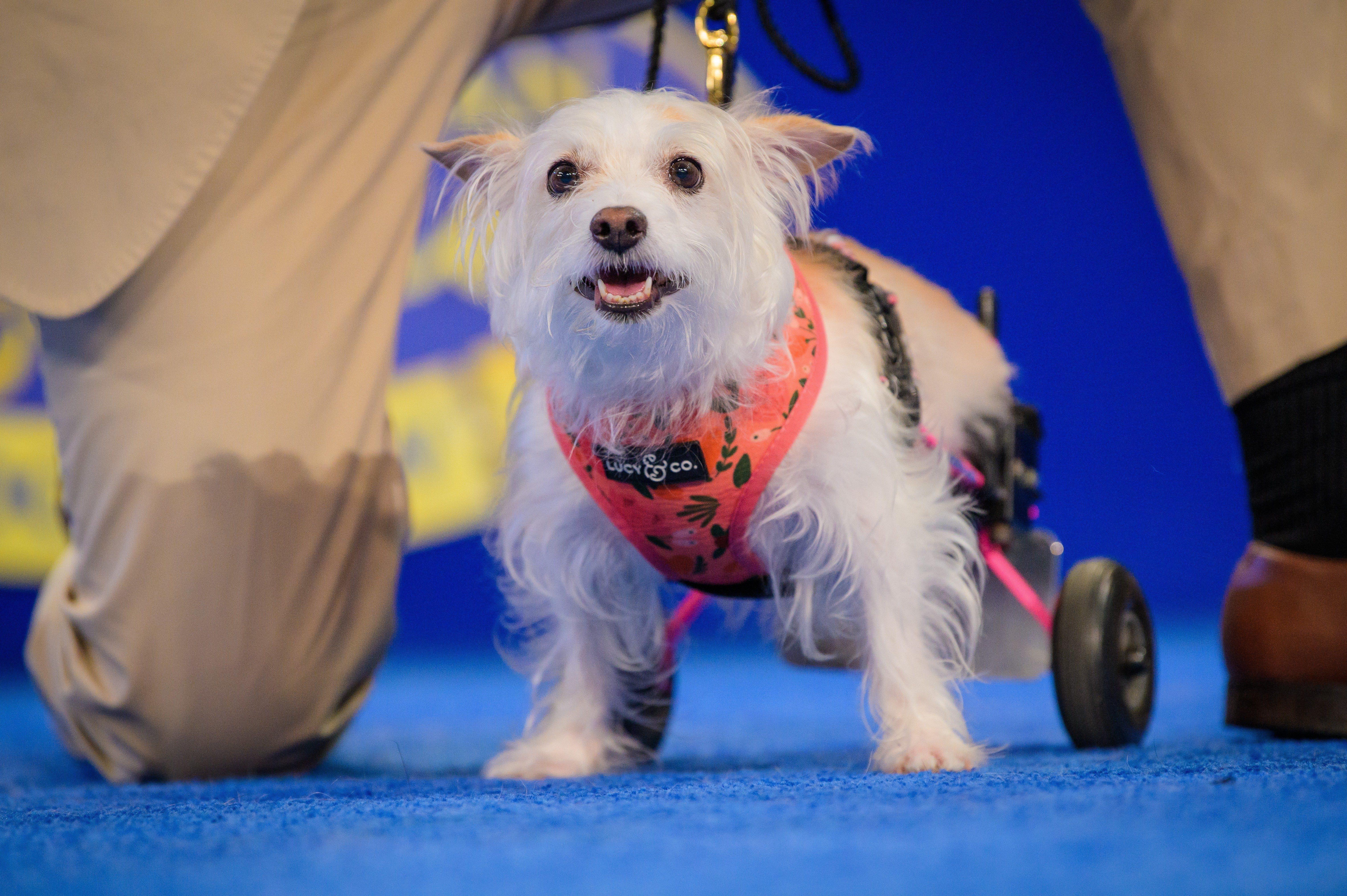 maia dog rescue show