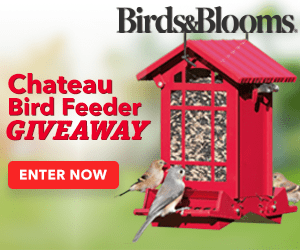 Chateau Bird Feeder Giveaway