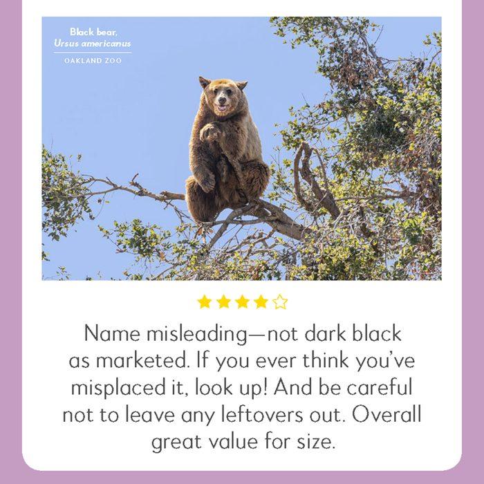 hilarious product reviews animal black bear