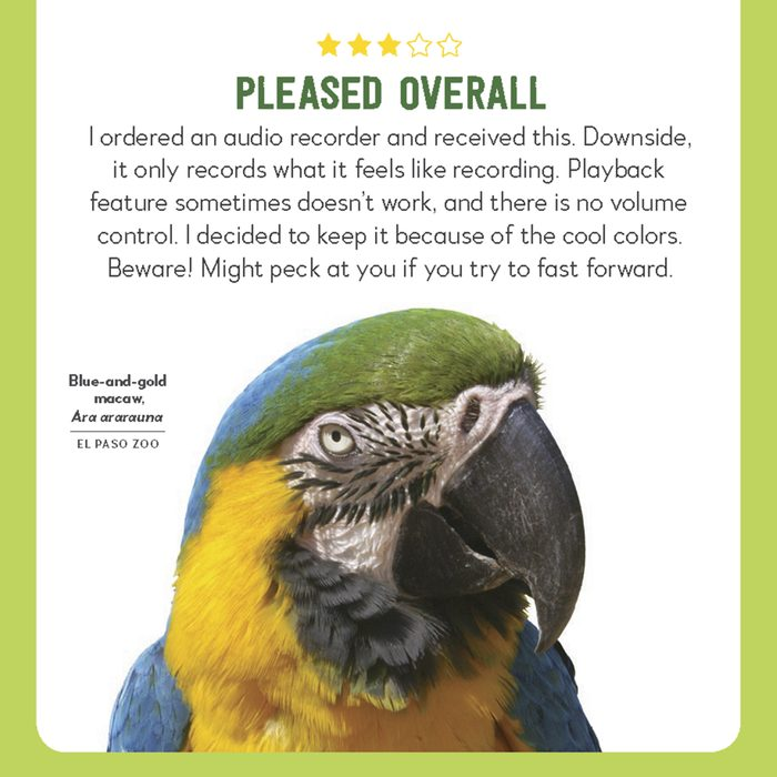hilarious product reviews animal blue and yellow macaw
