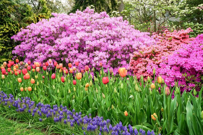 spring flowers colorful