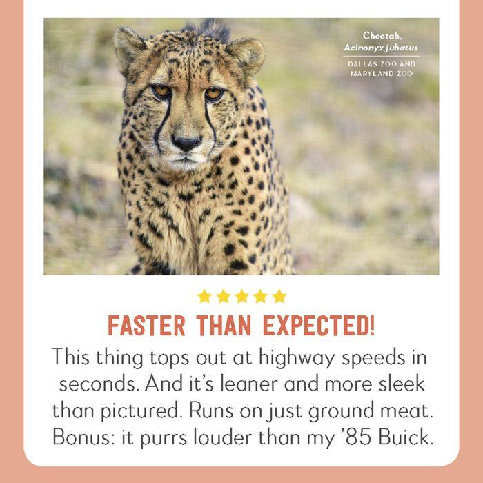 hilarious product reviews animal cheetah