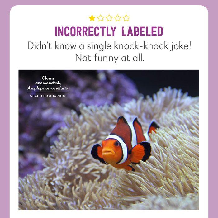 hilarious product reviews animal clownfish