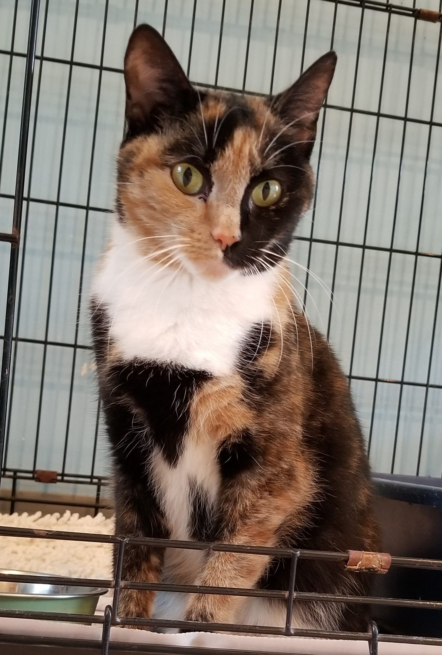 coco shelter cat rescue