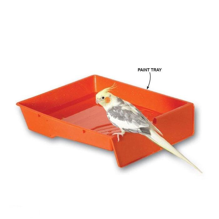 paint tray bird water