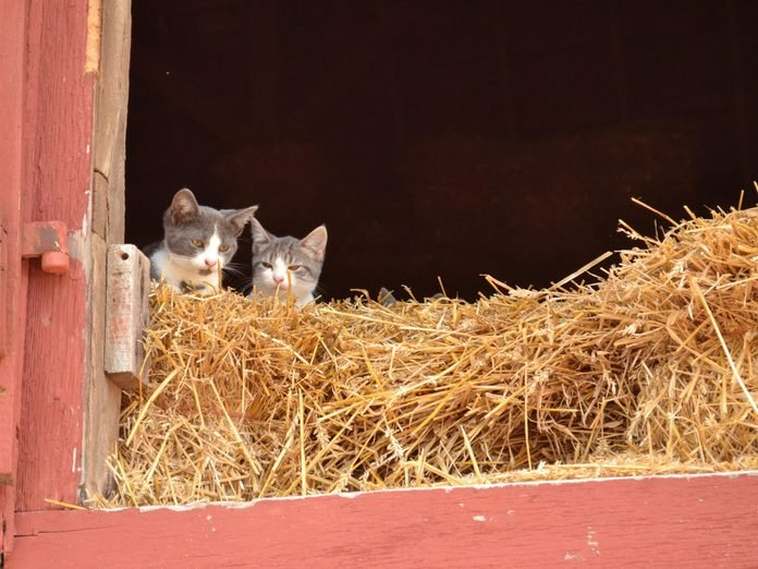 kitty perch farm spring kittens