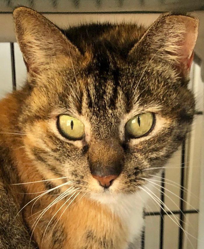 franklin cat