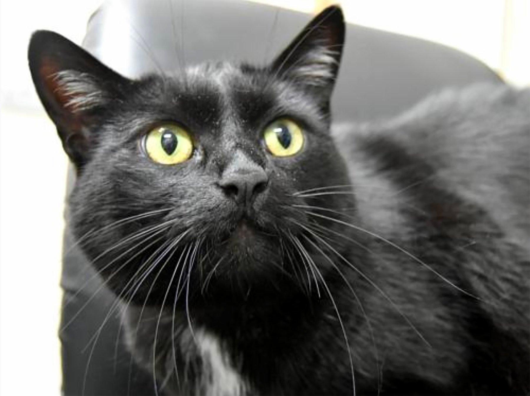 geneva shelter cat