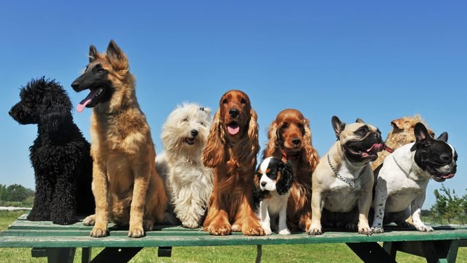 group of dogs on atop a picnic table