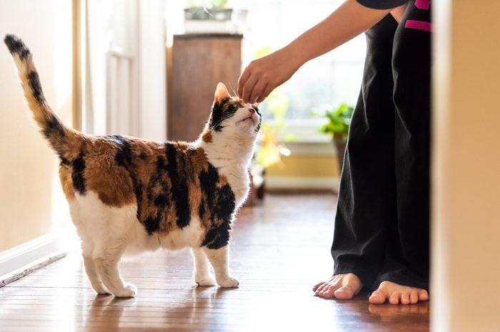 training cat